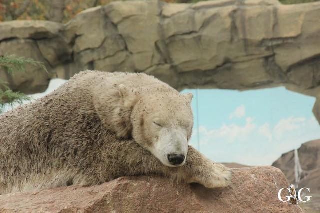 Besuch Zoo Rostock 20.10.201874