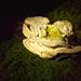 Roundhay  fungi
