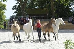 2018.06.21.128 HARAS du PIN - Toma et ses chevaux  de la Cie Atao - Photo of Saint-Germain-de-Clairefeuille