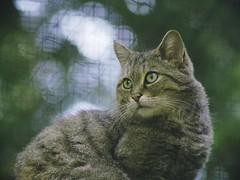 Cat Bokeh  - Schleswig-Holstein - Germany