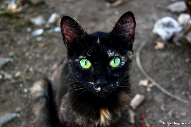 Портрет черного кота