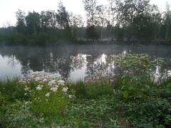 Sainte Montaine Eté2016, les étangs (3)