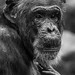One wise monkey