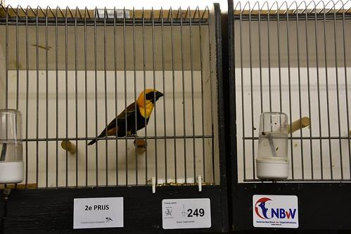 Streker Vogelvrienden © WEEFF