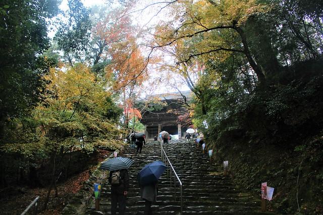 jingoji2-koyo009