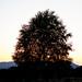 Tree Sun Silhouette