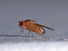 Fly little fly!