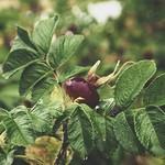 2018:07:28 18:31:15 - Garden Fruit Bokeh - Tarbek - Schleswig-Holstein - Germany