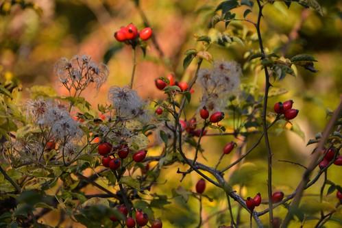 Flora autunnale