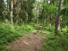 Bål Til Bål - Trippestadskogen