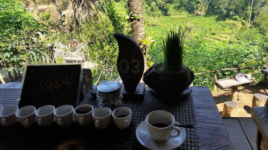 Bali Pulina coffee luwak plantation