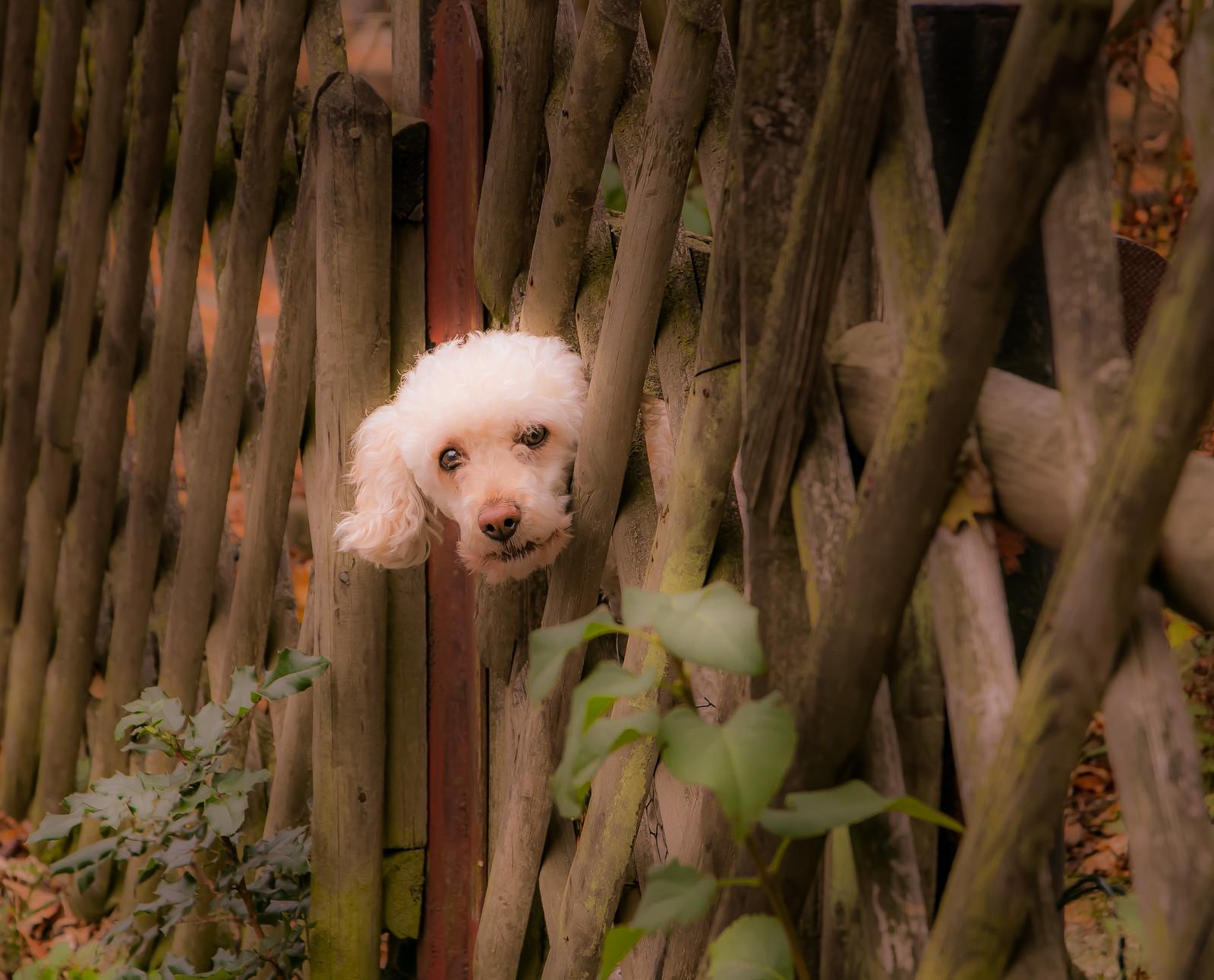 Hallo Hund