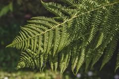 I fernly believe in ferns.