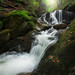 Spruce Brook II by Jack Wassell
