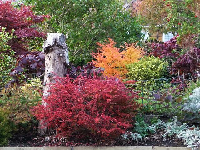 A splash of Autumn, Panasonic DMC-TZ4