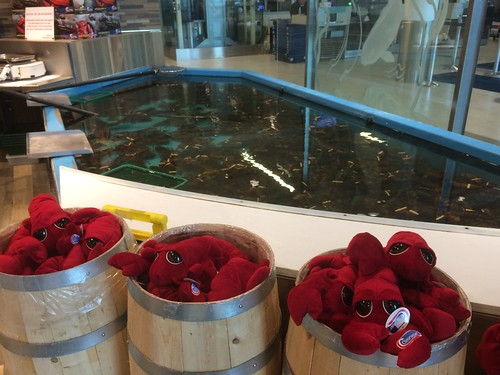 Live and Plush Lobsters at Halifax Stanfield International Airport