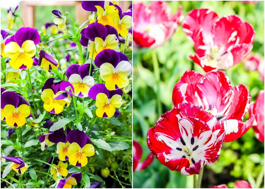 keukenhof-flowers-alexisjetsets