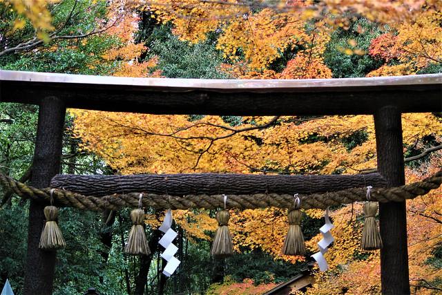 nomiyajinja-torii002