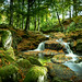 Forest Falls by maryhahn265