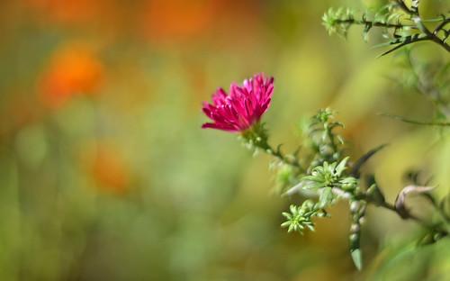 HAPPY WEEKEND! 🌷 Flowers of October. Finland, beautiful autumn 2018