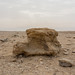 In the desert, near the red piramides Dahshur by Landleven (Irma Lit)