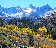 Aspen Grove, Sierra Nevada, CA 10-8-18