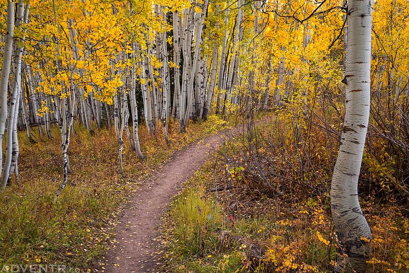 Trail Curve