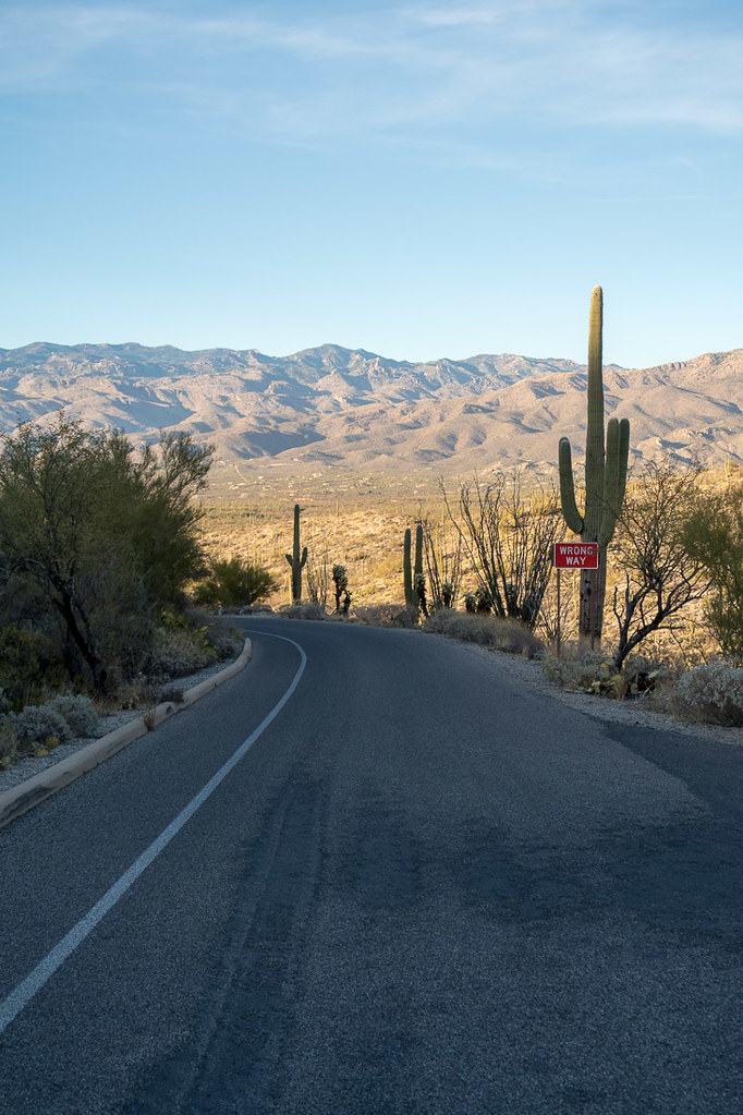 Saguaro National Park | Cactus Forest Drive