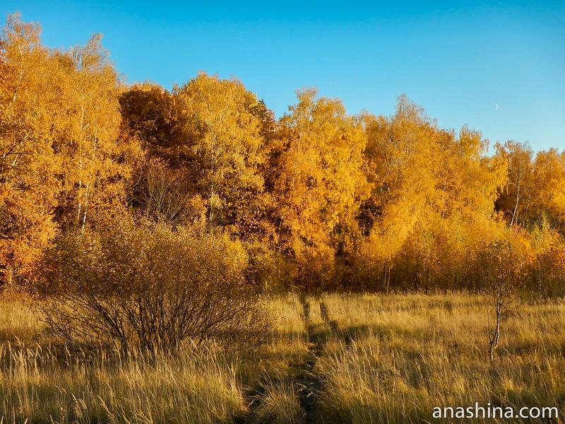Янтарный лес, осень