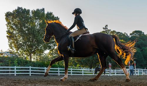 nx500 samsungnx500 equestrian