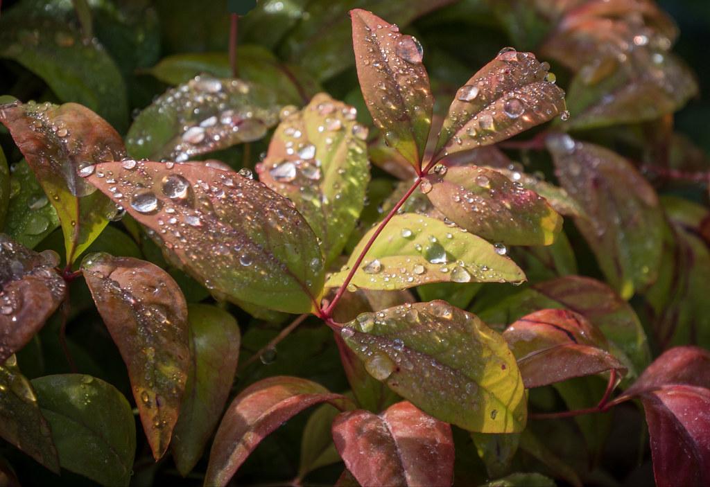 Rosée d'un matin d'automne... + recadrage 44702634565_18e6b70052_b