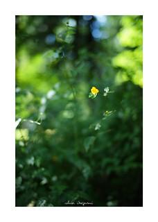 2018/9/22 - 13/24 photo by shin ikegami. - SONY ILCE‑7M2 / Carl Zeiss C Sonnar T* 1.5/50 ZM