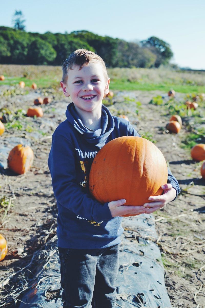 Picked the pumpkin
