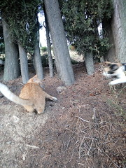 IMG_20180916_083413 - Photo of Montner