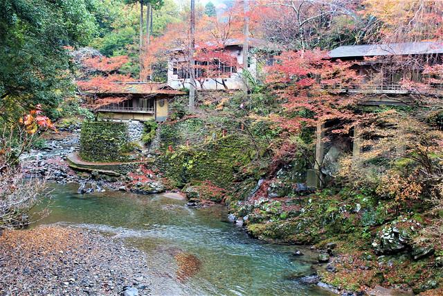 saimyouji-koyo008