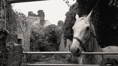 Moydrum Castle // County Westmeath // Ireland