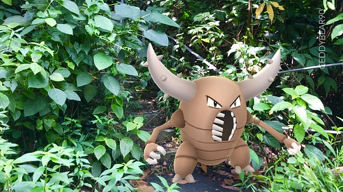 127 Pinsir (position=right)