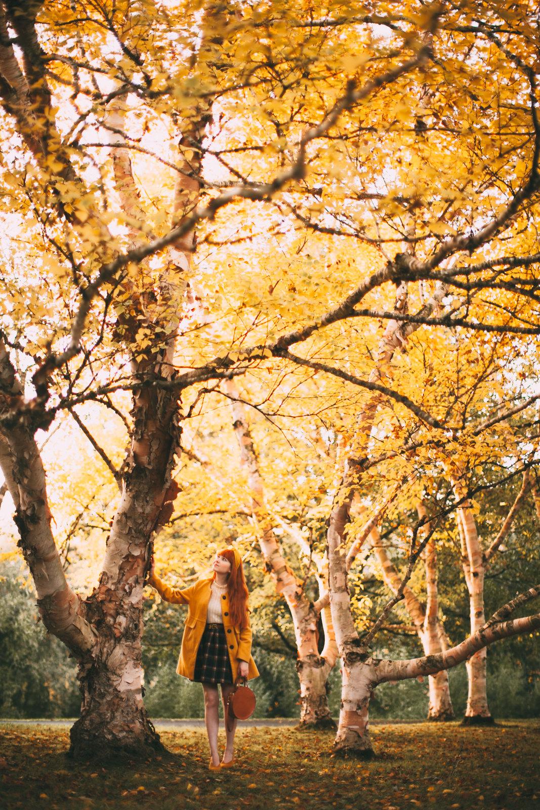 birch trees-37