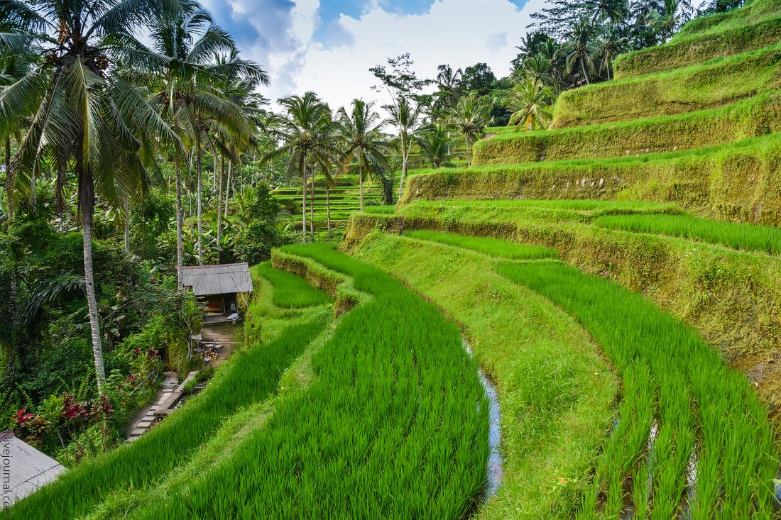 Ubud-Intertainment-(21)
