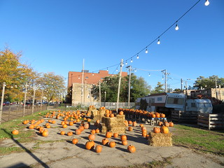 Punpkin Patch - Logan Square