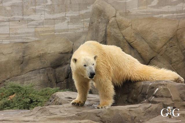 Besuch Zoo Rostock 20.10.201836