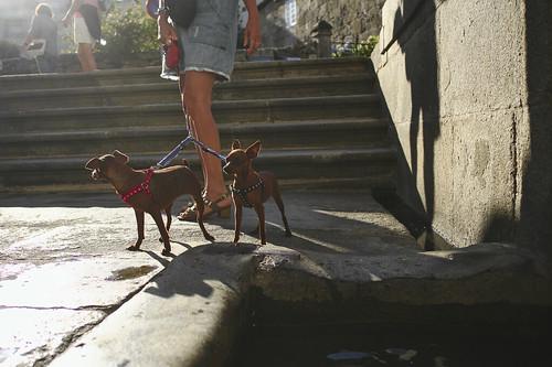 Two fierce hounds... #street #caldasdereis #galicia #spain #t3mujinpack