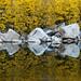 Goldie Rocks by Bob Bowman Photography
