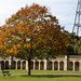 Autumn 2018 in south London | Crystal Palace-17