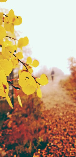 autumn street fromsunsetstosunrises sunset yellow leavesondust dew sandiapeak tramway trail alburqurque