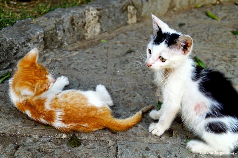 Играющие на площади Дров котята