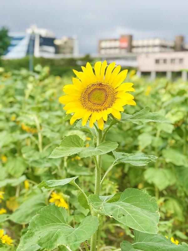 彩虹河濱公園_181006_0026
