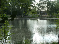 Sainte Montaine Eté2016, les étangs (5)