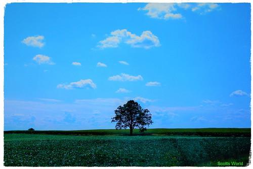 The Lone Tree (Explore!)