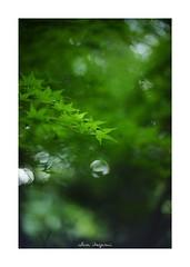 2018/9/16 - 1/18 photo by shin ikegami. - SONY ILCE‑7M2 / 七工匠  7artisans 50mm f1.1
